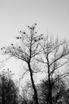 crows party by davidst123