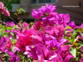 Pink Flower by gwenology