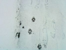 Paws and footsteps by arcticqueen