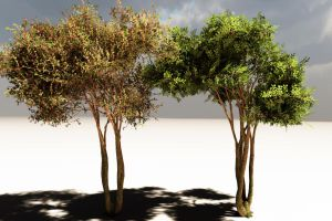 Crepe Myrtle Test by 2753Productions