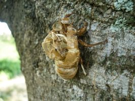 cicada skin stock 1 by StarsColdNight