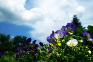 Flowers and Sky by MysteryWoman101