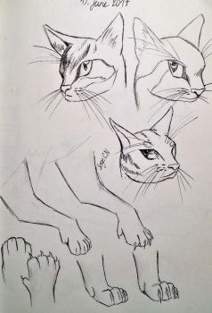 Cat study  by SageCamille