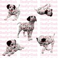 Dalmatian Puppies Stock 3 by Shoofly-Stock