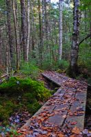 forest path 1 by LucieG-Stock