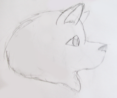Samoyed by gir-is-me