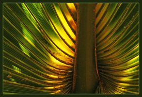 Palm by medveh