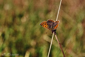 butterfly5 by hubert61