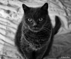 The beautiful Holly cat by bethlovesmomijidolls