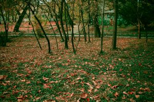little forest by simonamoon