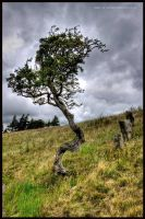 Wind and Wuthering by GaryTaffinder