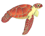 Red turtle by LadyLoriel