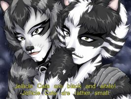 On Jellicle Cats by AnnaGiladi