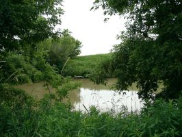 Green Pond by Landfill 1 by FantasyStock
