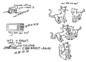 ghost microwaves and cats by freewy
