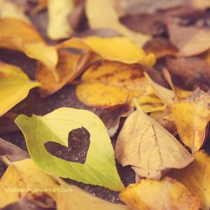 for the love of autumn by nhuthanh