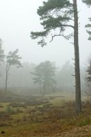 Silent trees in misty land 7 by steppeland