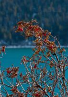 Red at Slide Lake by melly4260