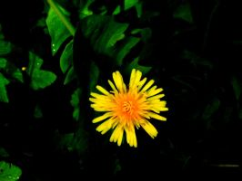 Dandy Lion by D1scipl31974
