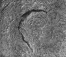 Large solar filament on September 17 by giovannigabrieli