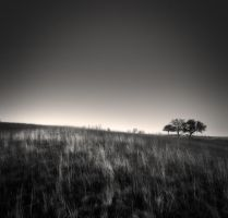 Three trees... by denis2