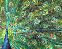 The Pride Peacock by yilin123456732