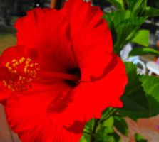 Red Flower by my-dog-corky