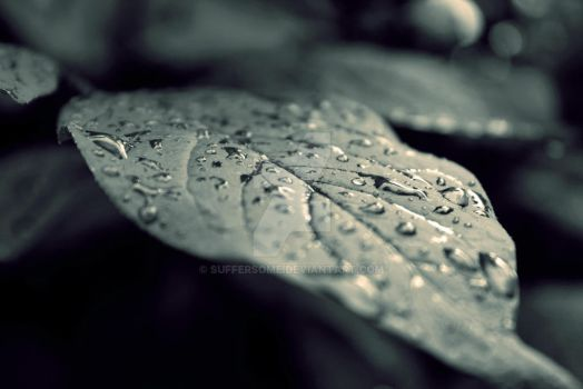 dew-drops by SufferSome
