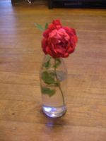 A rose from our yard... by DJ-Zemar