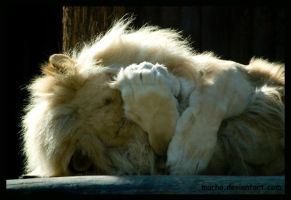 lion: everybody needs a hug by morho