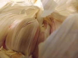 snail shell garlic by CodedNotion