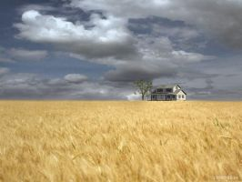 Wheat Field by curious3d