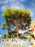 Albero a Nervi by ChemaIllustration