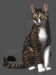kitty by Luphin