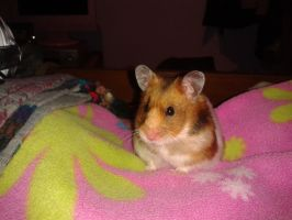 Alfie The Hamster 4 by OkamiRyuu1993