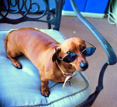 Penny with sunglasses by fiammaxd