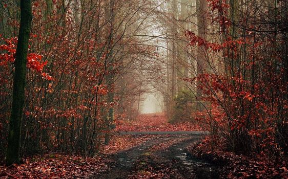 Fall Forest by Justine1985