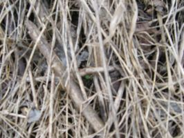 Texture Dead Grass 2 by markopolio-stock
