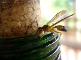 Wasp and honey 2 by ViniciusCBO