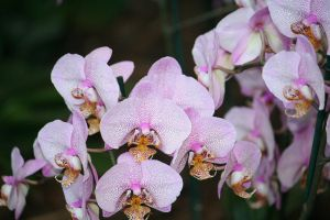 orchids floriade 14 by ingeline-art