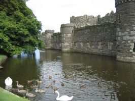 Wildlife in the Moat (Beaumaris Castle) by Syltorian