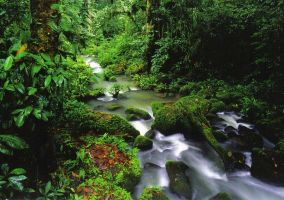 Rainforest in Costa Rica by Colonelengle