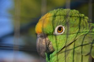 The pretty eyes of a parrot by AmmarkoV1