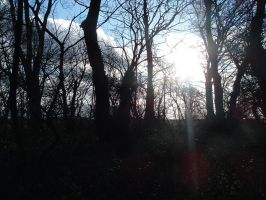 Copse stock 9 by RobynSmaleBeorg
