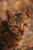 Beauty depth by M3los93