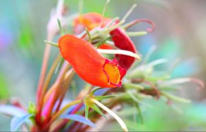 Macro Beauty by FallOut99