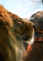 Lion V by Verenth