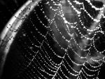 web droplets by BD0g21