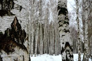 Winter in Russia. by Lilith007oO