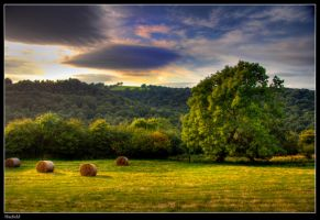 Hayfield by Megglles